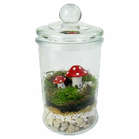 shop terrariums